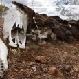G1 RN – A Secretaria Nacional de Proteção e Defesa Civil, vinculada ao Ministério da Integração Nacional, reconheceu a situação de emergência por causa da seca em 153 – dos […]