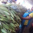 A tradicional feira livre de Lajes começou o sábado com muitas barracas comercializando o milho. Bem na véspera do dia de São João, o lajense poderá passar um dos principais […]